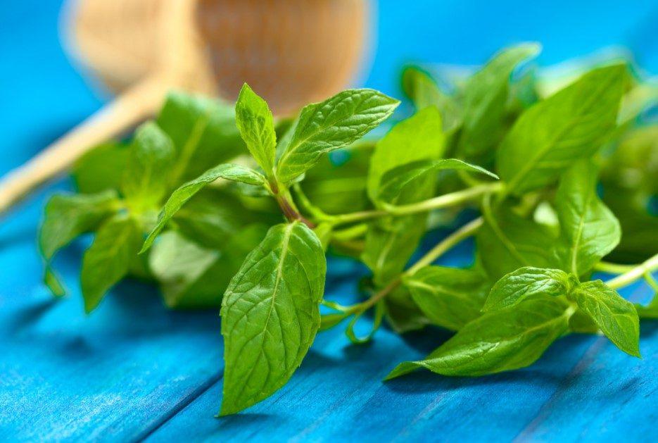 Using mint leaves